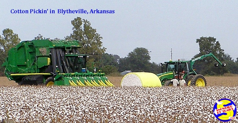 Cotton pickin' in Blytheville. Arkansas