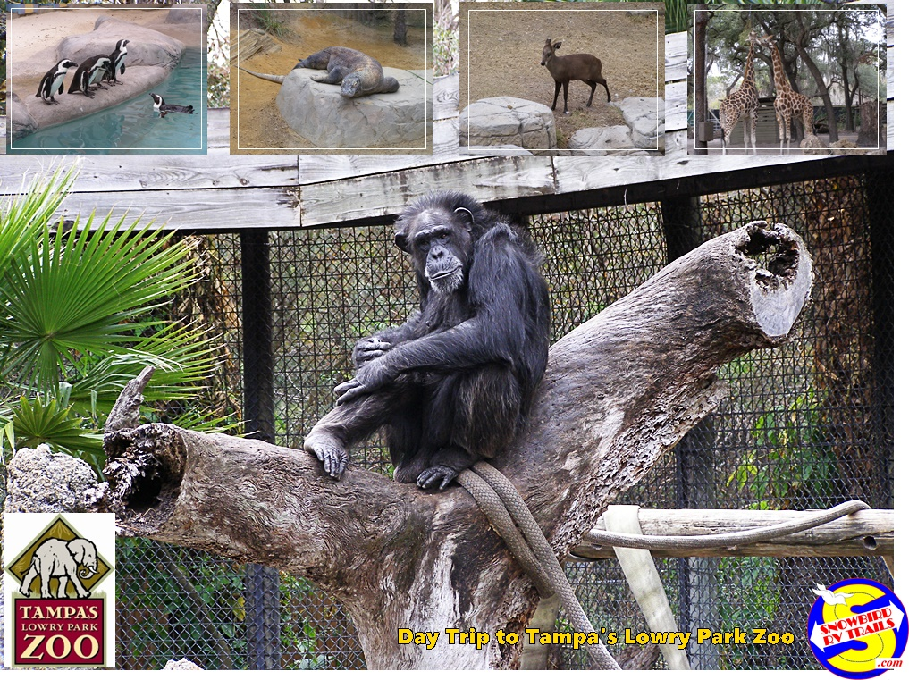 Day Trip to Tampa's Lowry Park Zoo