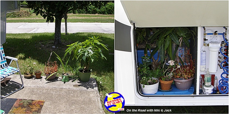 Packing your plants for the RV trip